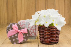 Red frangipani (plumaria) flower Royalty Free Stock Photos