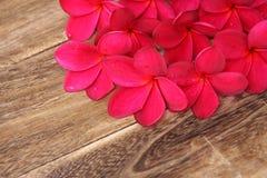 Red Frangipani Plumeria flower. On the wood stock photos