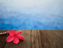 Red frangipani (plumeria) flowers pagoda tree on swimming pool Royalty Free Stock Photo