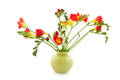 Red Freesias in vase Stock Photography