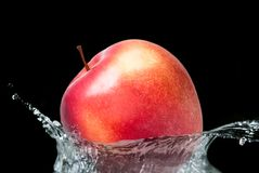 A red fresh apple falling Royalty Free Stock Photo