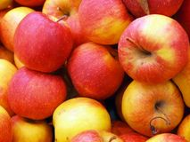 Red fresh apples. Red apples background. Fresh colorful fruits in one place Stock Images