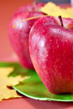 Red fresh apples. With autumn leafs royalty free stock photo