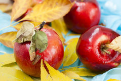 Red fresh apples. With leaves Royalty Free Stock Photos