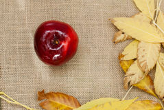 Red fresh apples. With leaves on sacking Stock Images