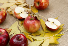 Red fresh apples. With leaves on sacking Stock Image