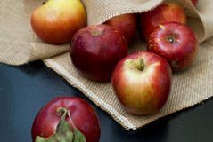 Red fresh apples Royalty Free Stock Photo