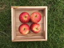 Red fresh apples in a wooden box on the lawn. royalty free stock photos
