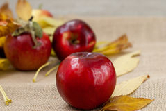 Red fresh apples. With yellow leaves Stock Images