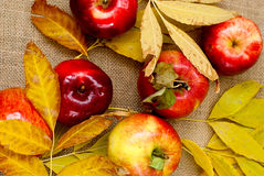 Red fresh apples. With yellow leaves Stock Photo