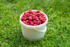 Red, fresh berry raspberry in a bucket. Against a green grass Stock Images