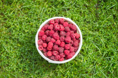 Red, fresh berry raspberry in a bucket. Against a green grass Royalty Free Stock Image