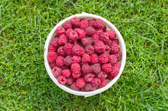 Red, fresh berry raspberry in a bucket. Against a green grass Royalty Free Stock Photo