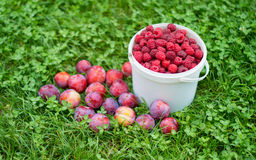 Red, fresh berry raspberry in a bucket. Against a green grass Stock Photos