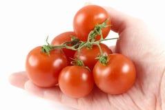 Red fresh bio tomato Royalty Free Stock Photo