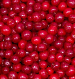 Red fresh cherry background Stock Images