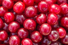 Red fresh cherry Stock Photo