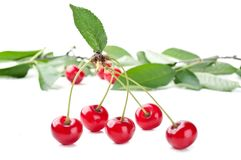 Red fresh cherry and leaf Stock Image