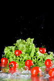 Red fresh cherry tomatoes and green lettuce in water Royalty Free Stock Images