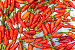 Red fresh chili Royalty Free Stock Photography