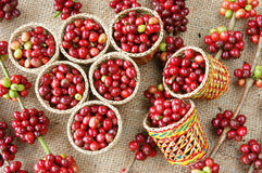 Red fresh coffee bean Royalty Free Stock Photo