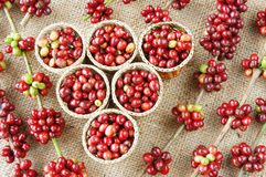 Red fresh coffee bean Stock Photography