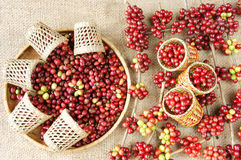 Red fresh coffee bean Stock Image