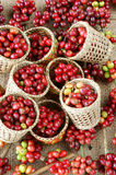 Red fresh coffee bean Royalty Free Stock Photos