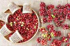 Red fresh coffee bean Royalty Free Stock Photo