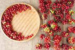 Red fresh coffee bean Royalty Free Stock Photography