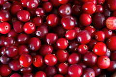 Red fresh cranberries background Royalty Free Stock Photos