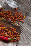 Red fresh and dried Chili Peppers Royalty Free Stock Images