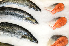 Red fresh fish. On ice background Royalty Free Stock Photos