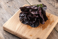 Red fresh lettuce Royalty Free Stock Image