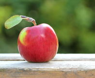 Red, fresh and organic apple Stock Photography