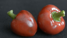 Red fresh pepper stock footage