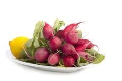 Red fresh radish Royalty Free Stock Photo