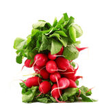 Red fresh radishes. Fresh radishes on white background Royalty Free Stock Images