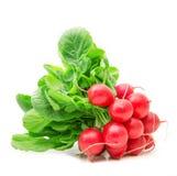 Red fresh radishes. Fresh radishes on white background Stock Photos