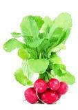 Red fresh radishes. Fresh radishes on white background Royalty Free Stock Photos