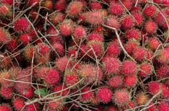Red fresh rambutans lie chaotically on the counter royalty free stock images