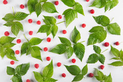 Red fresh raspberries and leaves on white background. Raspberry leaf pattern on white background. Scattered berries Stock Images