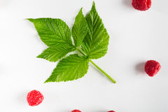 Red fresh raspberries and leaves on white background. Fresh raspberry leaf on white background. Scattered natural ripe organic berries, top view flat lay Royalty Free Stock Images