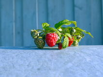 Red fresh raspberry abstract. Background Royalty Free Stock Photography