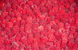 Red fresh raspberry background. Photo for a design Royalty Free Stock Photography