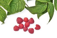 Red fresh raspberry with green leaves isolated on white backgrou. Red fresh ripe raspberry with green leaves isolated on a white background Royalty Free Stock Photos