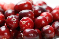 Red cranberry fruit Royalty Free Stock Photo