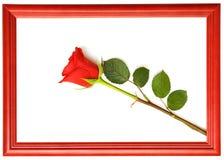 Red fresh rose Stock Photos