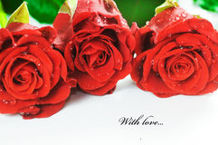 Red fresh roses on white Stock Image