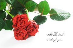 Red fresh roses on white Royalty Free Stock Images